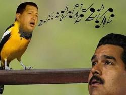 Chavez pajarito