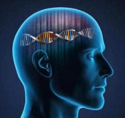Cabeza ADN